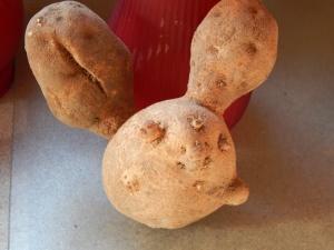 2014-9-8-Allison(Frog,Potatoes) 004