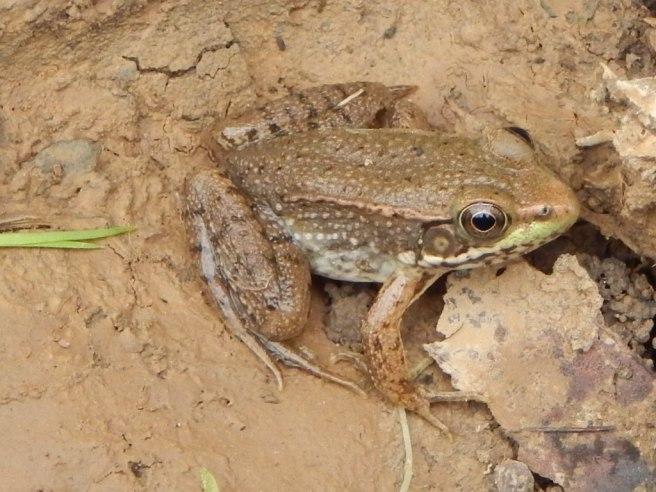 2014-9-8-Allison(Frog,Potatoes) 009