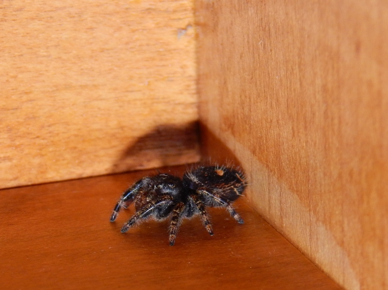 -spider 016