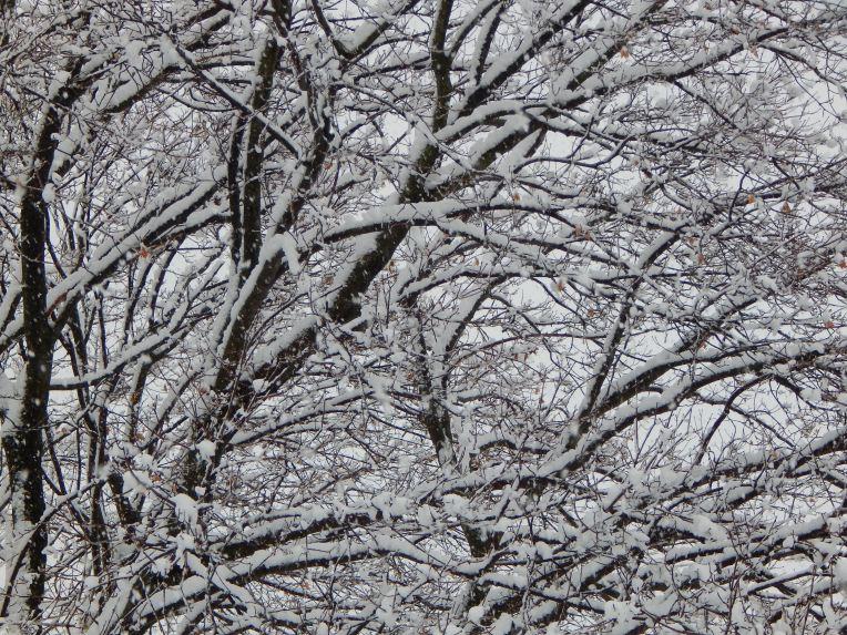 -Allison (Nov. snow, hidden pictures) 030