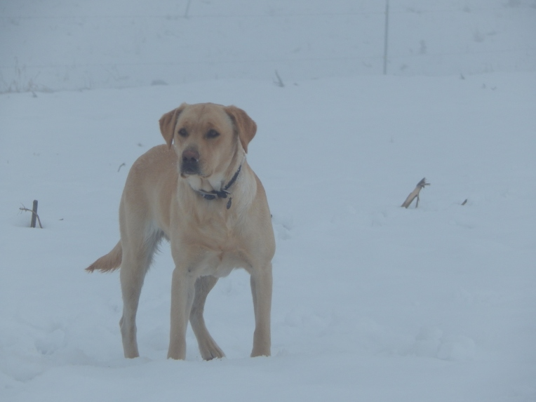 -Allison (Nov. snow, hidden pictures) 044