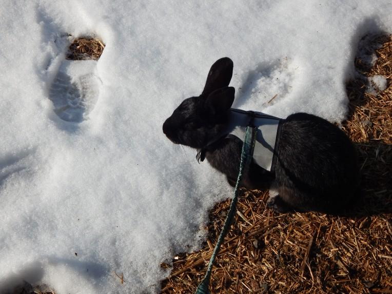 -Allison (Nov. snow, hidden pictures) 049