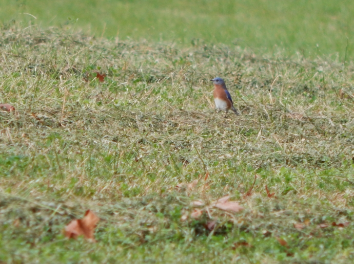 -Allison (walk, bluebirds) 004