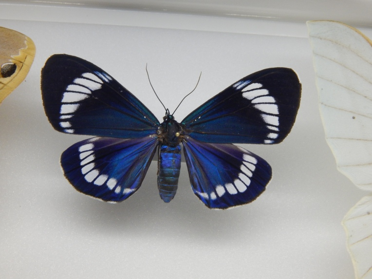 -Allison (Creation Museum) 082