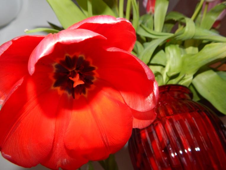 -Allison (headscarves, tulips) 024