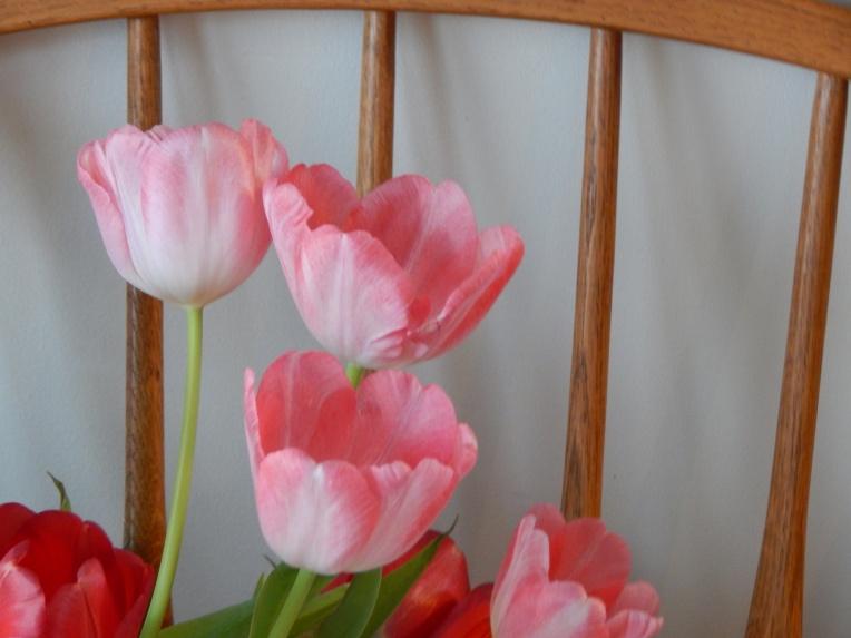 -Allison (headscarves, tulips) 029