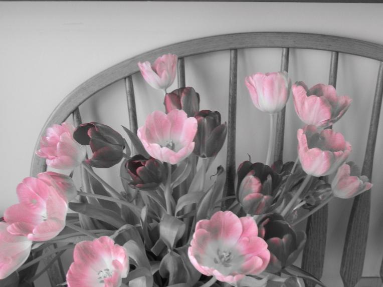 -Allison (headscarves, tulips) 031