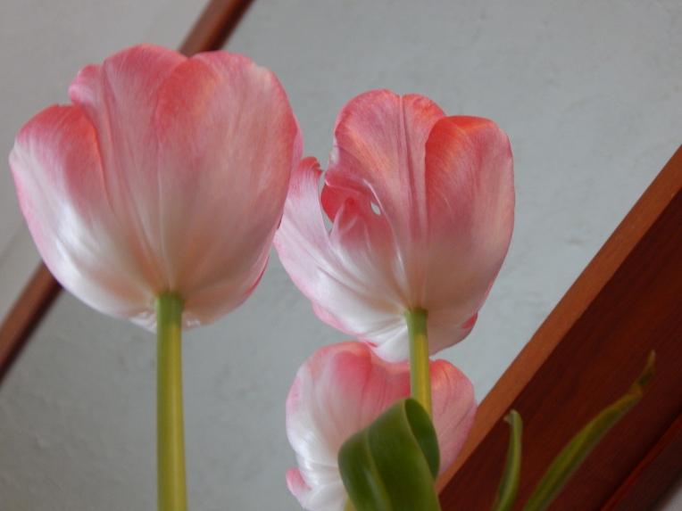 -Allison (headscarves, tulips) 032