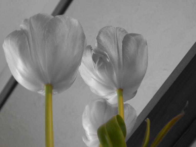 -Allison (headscarves, tulips) 033