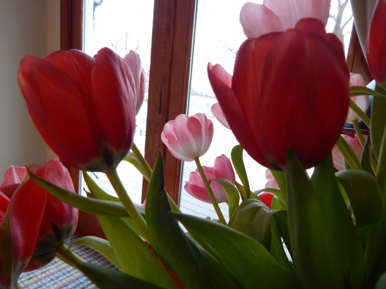 -Allison (headscarves, tulips) 037