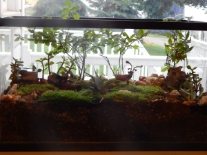 -Allison (bunnies, forest terrarium) 009