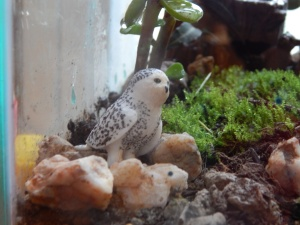 -Allison (bunnies, forest terrarium) 010