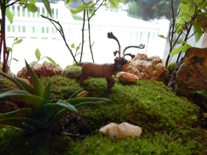 -Allison (bunnies, forest terrarium) 013