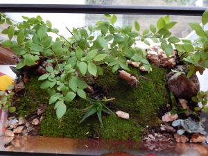 -Allison (bunnies, forest terrarium) 016