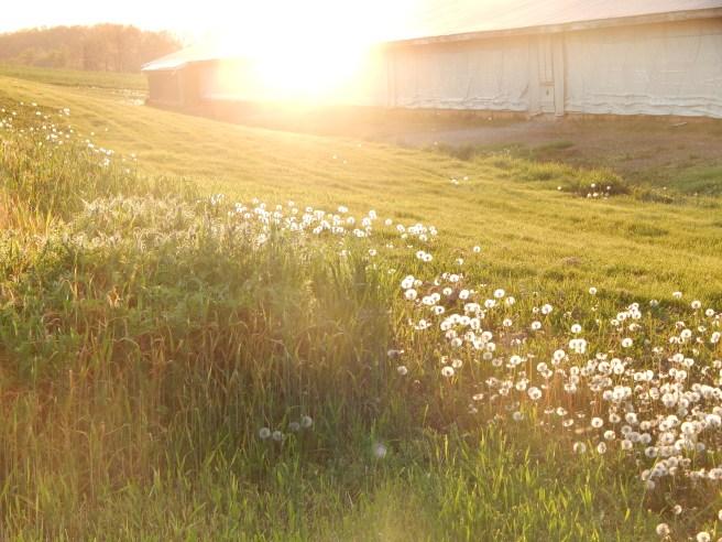 -Allison(walk, arboretum, Lily) 002