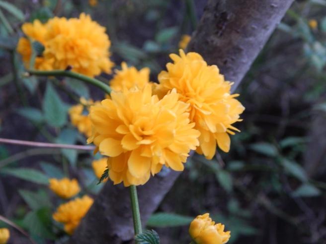-Allison(walk, arboretum, Lily) 007
