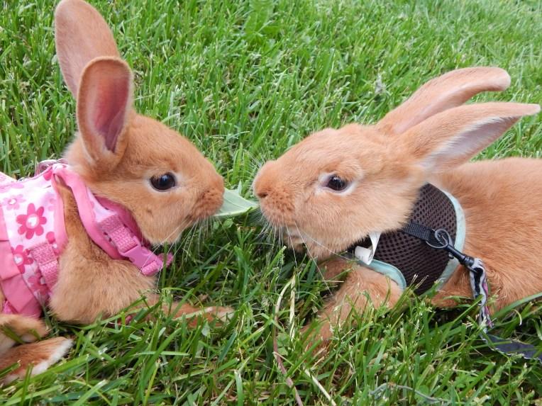 -Allison (bunnies, forest terrarium) 001