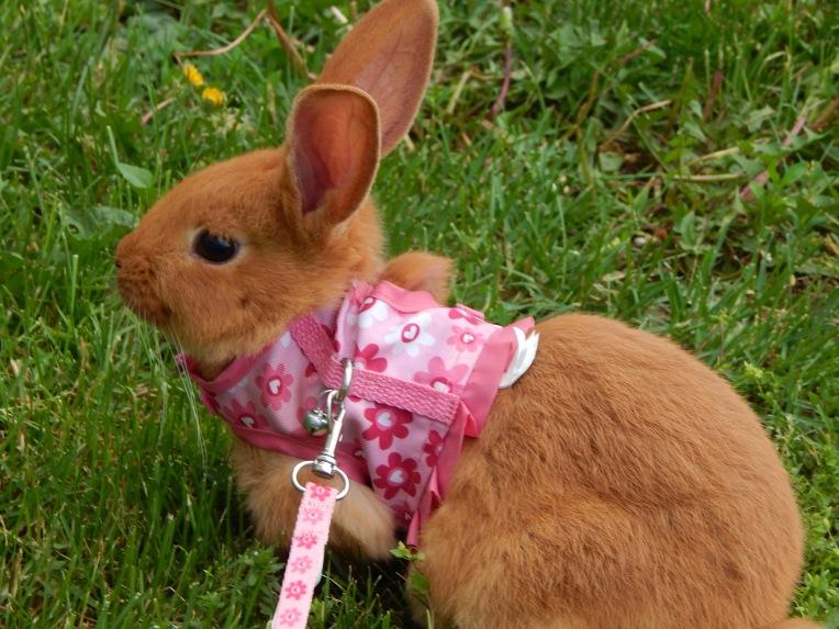 -Allison (bunnies, forest terrarium) 002