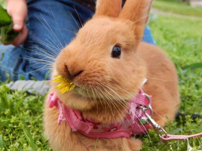 -Allison (bunnies, forest terrarium) 003