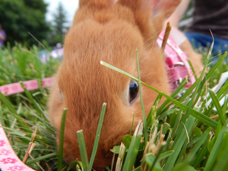 -Allison (bunnies, forest terrarium) 005