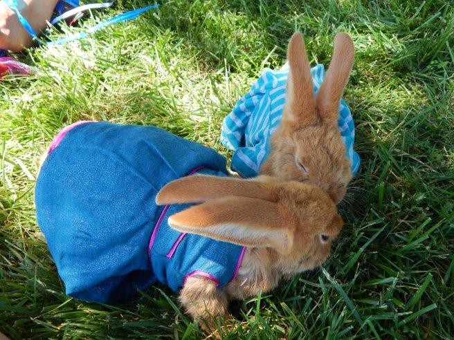 -Allison (bunnies dressed up) 002
