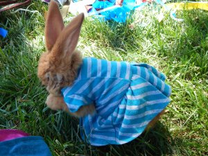 -Allison (bunnies dressed up) 004