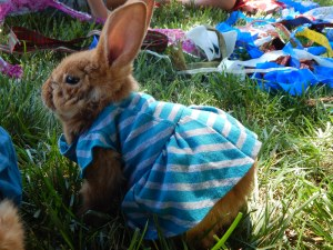 -Allison (bunnies dressed up) 005