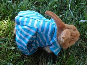 -Allison (bunnies dressed up) 009