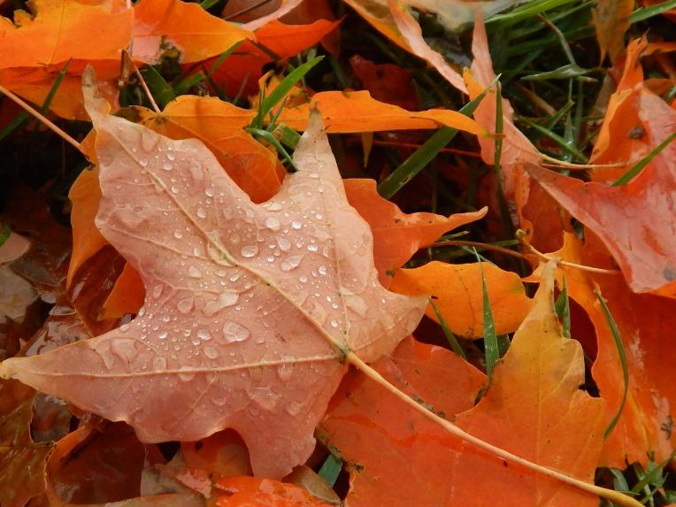 -Allison(Leaves, crayfish shedding) 010