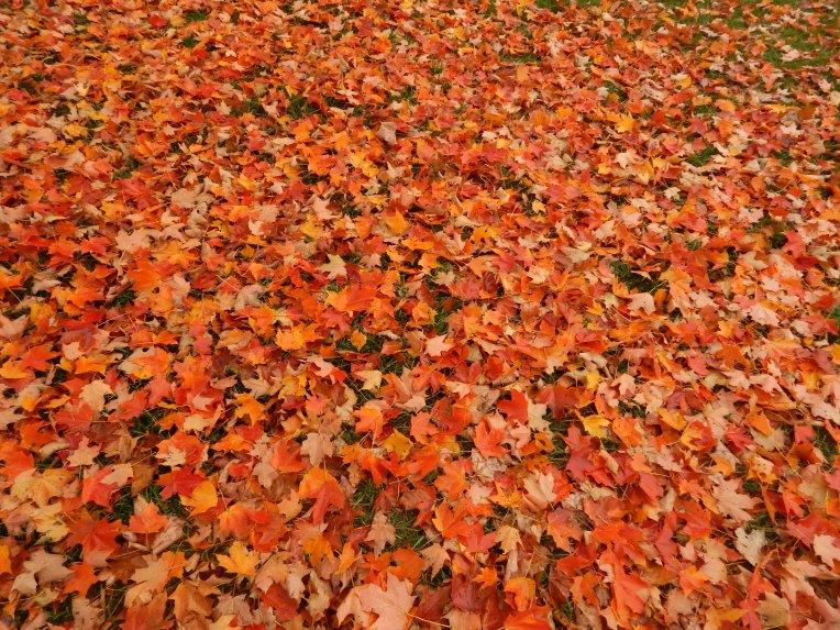 -Allison(Leaves, crayfish shedding) 011
