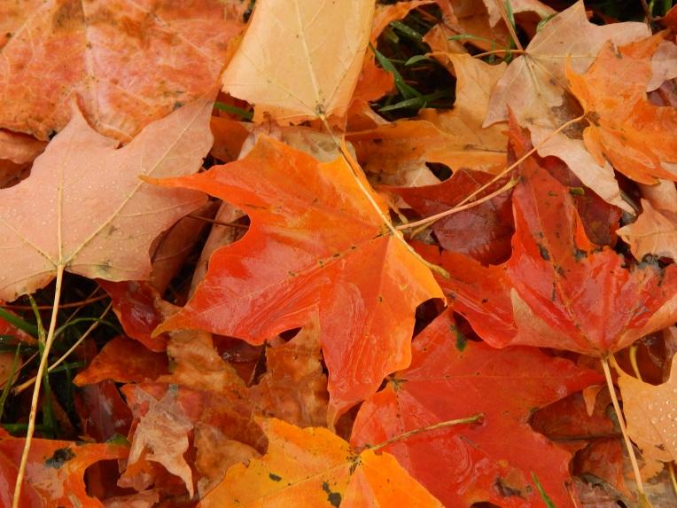 -Allison(Leaves, crayfish shedding) 014