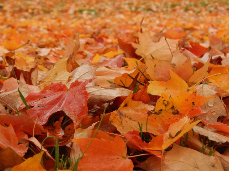 -Allison(Leaves, crayfish shedding) 016