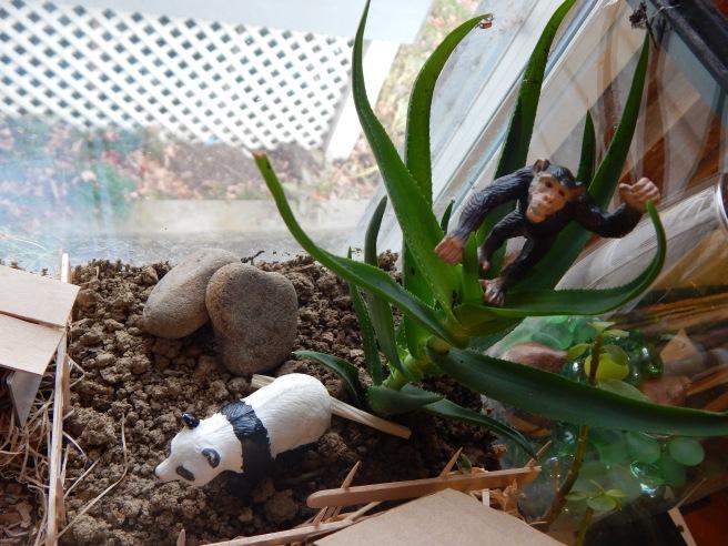 -Allison(felt doll, zoo terrarium, Clemmy) 006