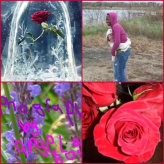 angela rose photography