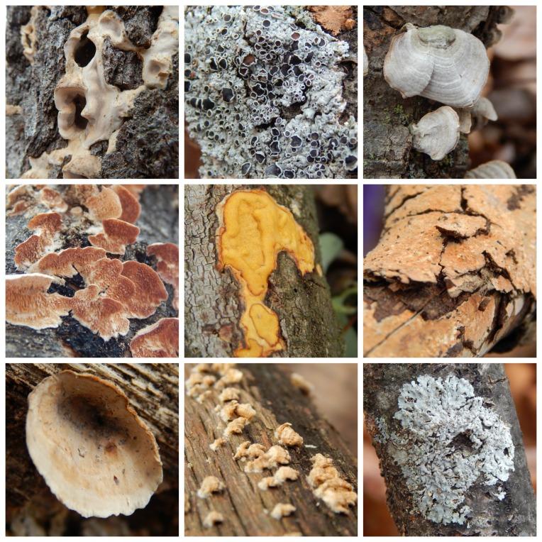 lichen and fungi