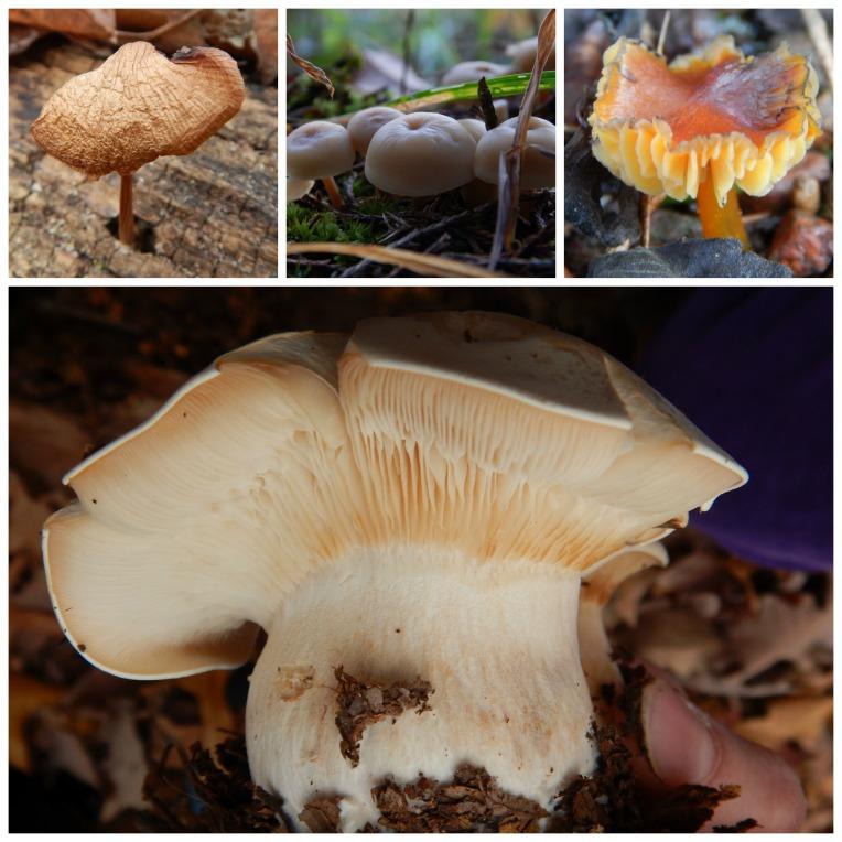 mushroom collage 2