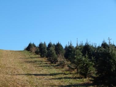 -Allison(Christmas tree and bunnies) 011 (1280x960)