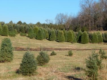 -Allison(Christmas tree and bunnies) 026 (1280x960)