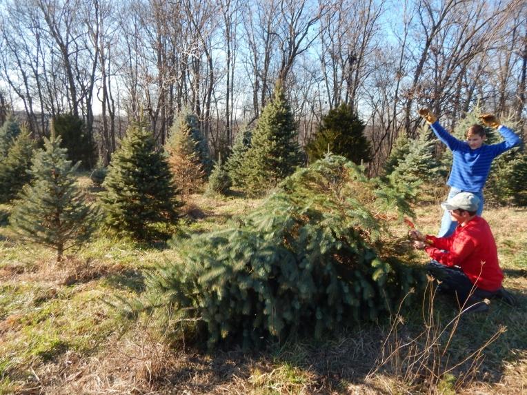 -Allison(Christmas tree and bunnies) 031 (1280x960)