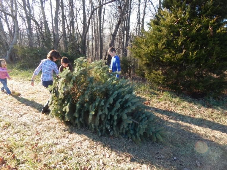 -Allison(Christmas tree and bunnies) 034 (1280x960)