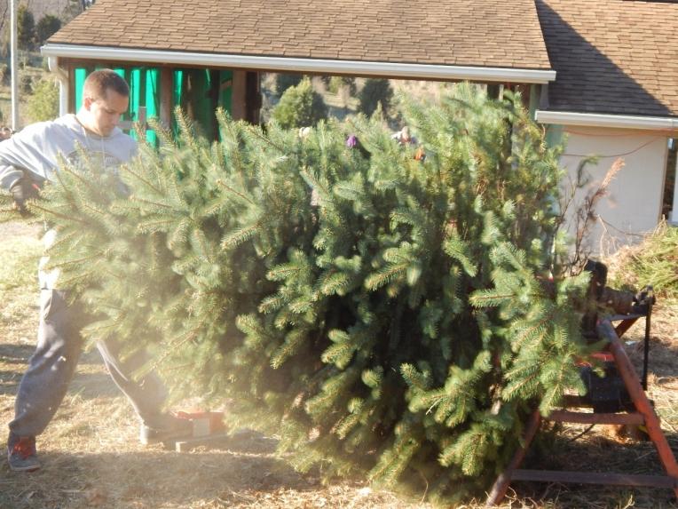 -Allison(Christmas tree and bunnies) 035 (1280x960)