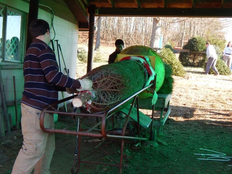 -Allison(Christmas tree and bunnies) 036 (1280x960)