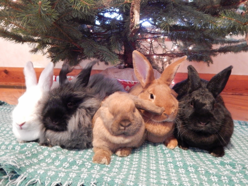 Merry Christmas from the Bunnies! (3/5)