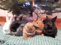 -Allison(Christmas tree and bunnies) 058 (1280x960)