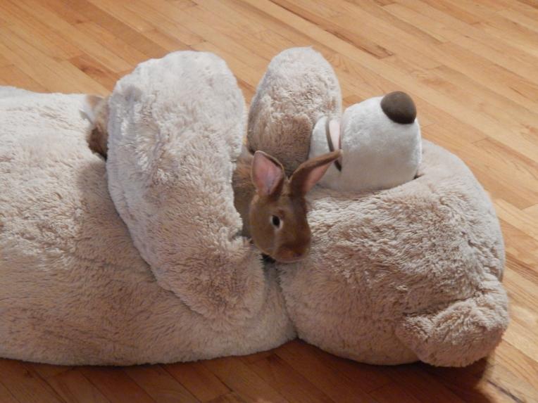 Allison(frost, bunnies, ATCs) 006 (1280x960)