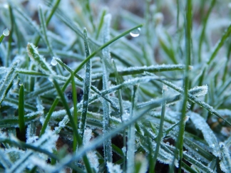 Allison(frost, bunnies, ATCs) 028 (1280x960)