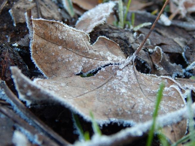 Allison(frost, bunnies, ATCs) 029 (1280x960)