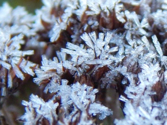 Allison(frost, bunnies, ATCs) 046 (1024x768)