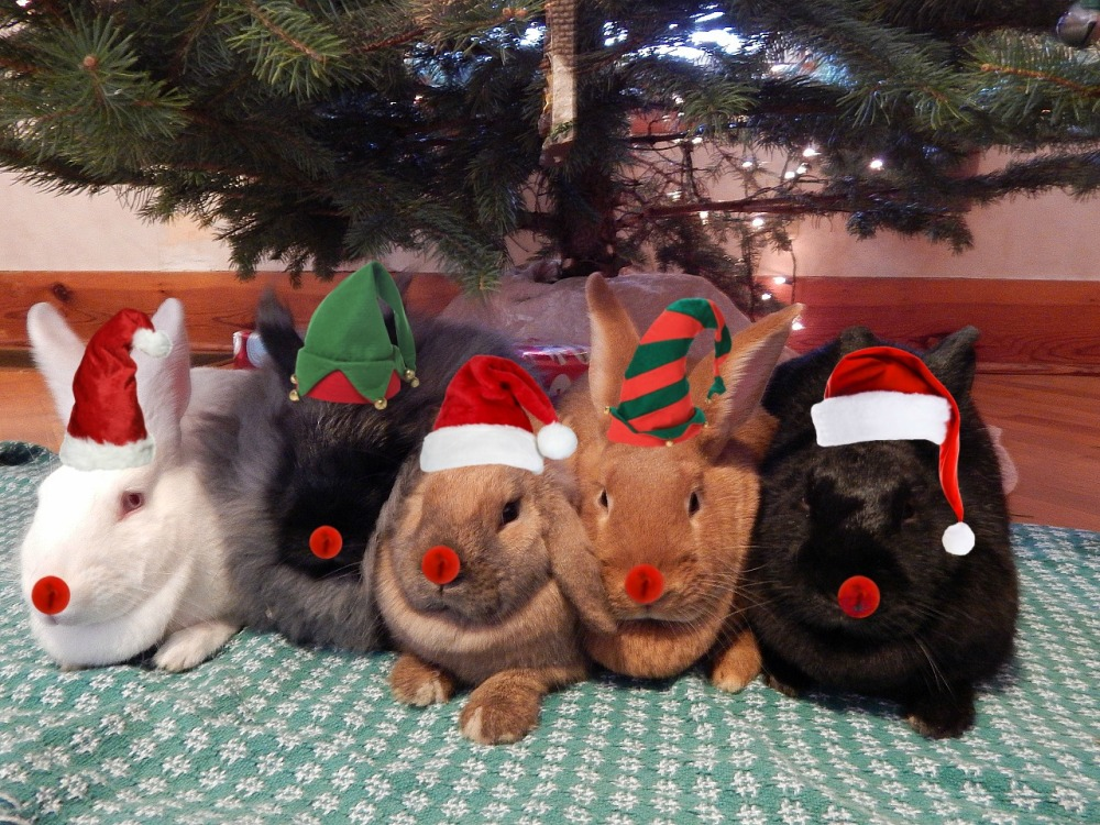 Merry Christmas from the Bunnies! (1/5)