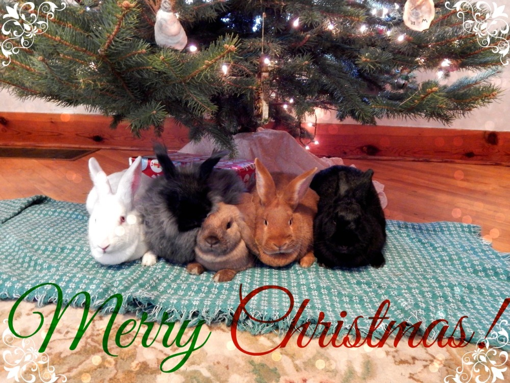 Merry Christmas from the Bunnies! (5/5)